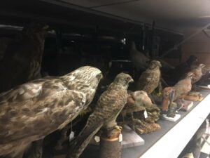 Models of birds of prey on a metal shelf.